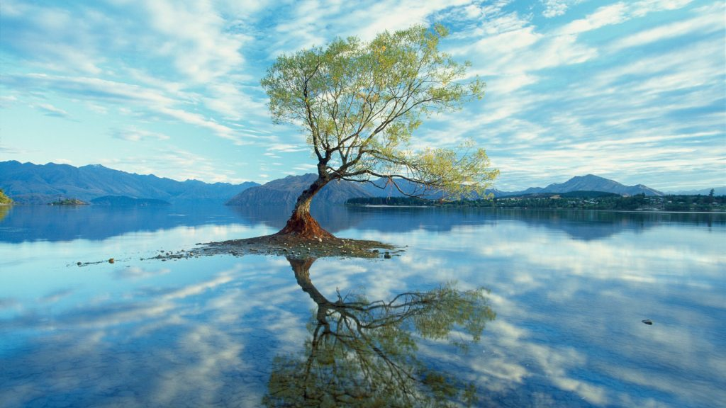 A partially underwater submerged tree in Lake Wanaka, New Zealand