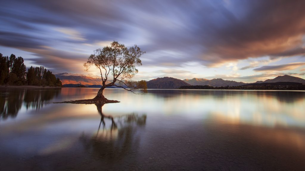 One Calm Tree, morning at Lake Wanaka, New Zealand
