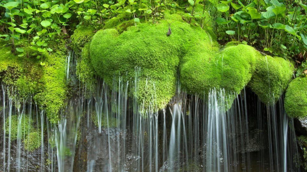Waterfall and moss, Shenandoah National Park, Virginia, USA