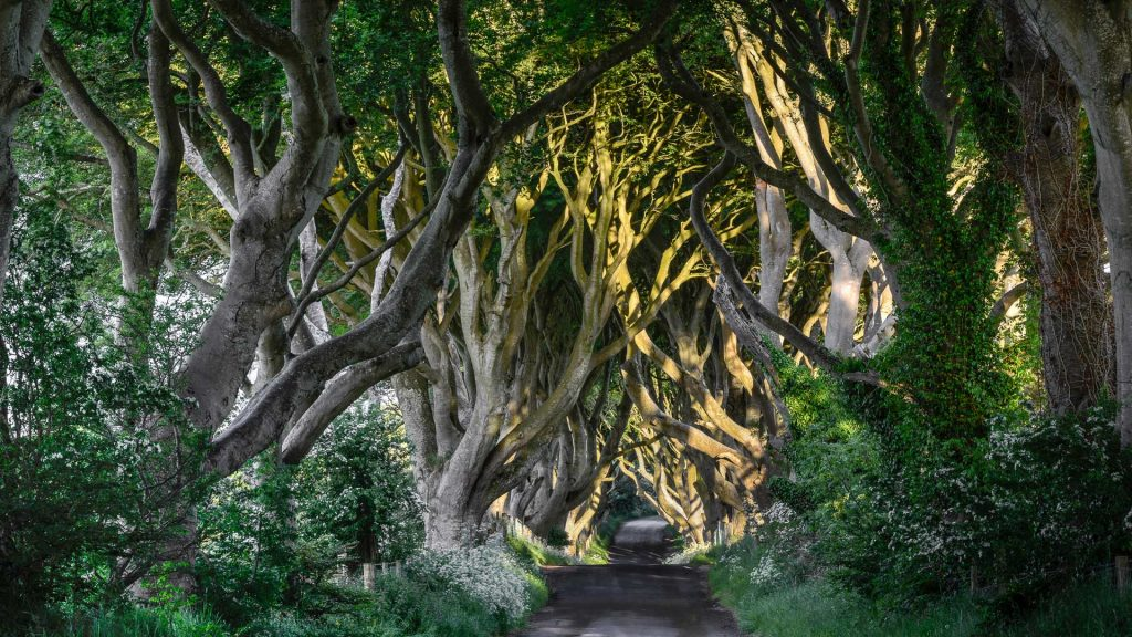 The Dark Hedges County Antrim, Bregagh Road, Northern Ireland, UK
