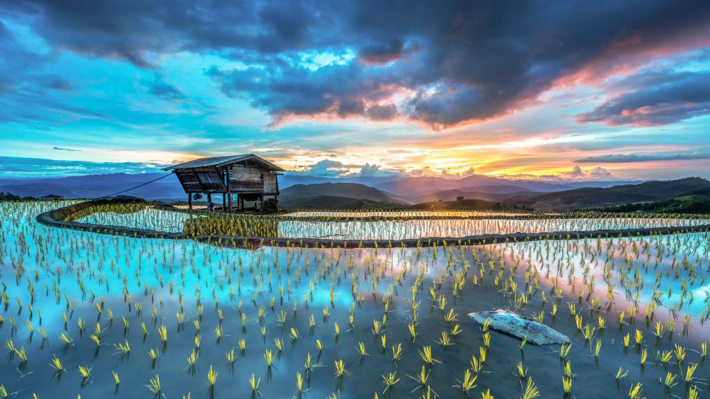 Sunset on rice terraces, Mae Jam, Chiang Mae, Thailand
