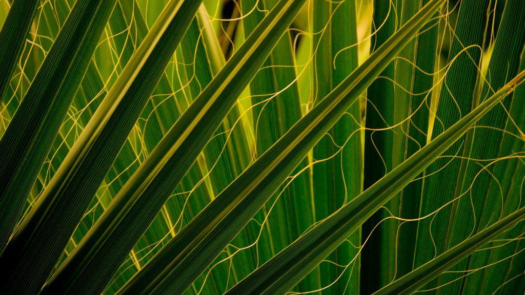 Tropical palm leaves, Des Moines Botanical Garden, Iowa, USA