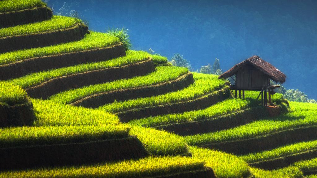 Little home on the terraced field, Yên Bái, Vietnam