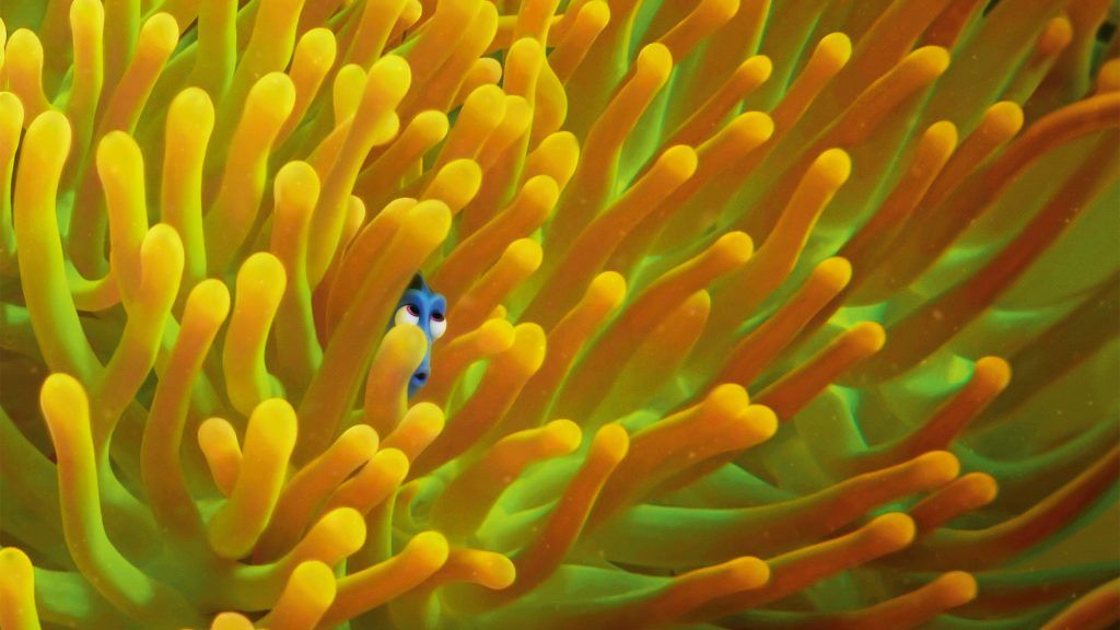 Finding Dory. Have you seen her?