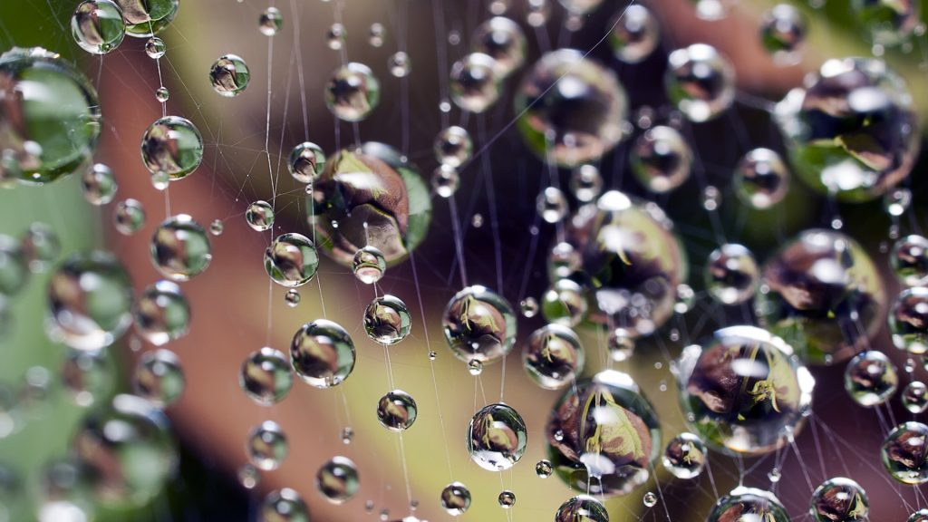 Drops of water hanging on spider web, Gijón, Asturias, Spain