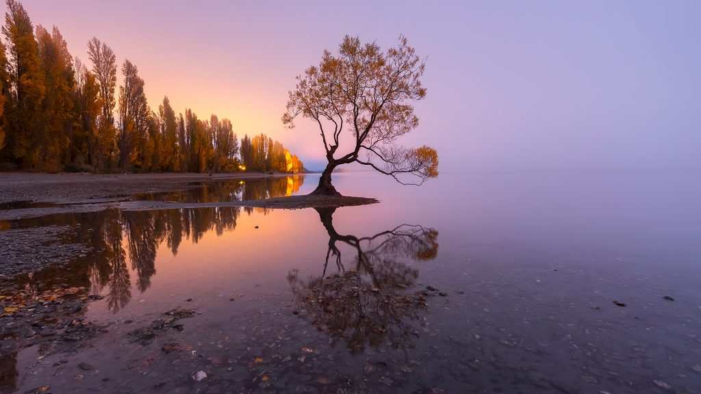 The famous tree at the shoreline of Lake Wanaka at sunrise, New Zealand South Island