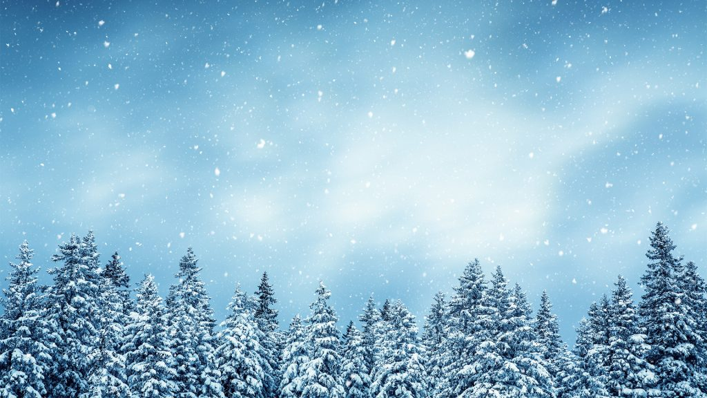 Winter forest - snowcapped trees with falling snowflakes
