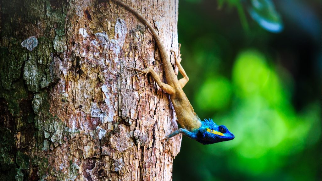 Lizard on tree in rainforest, Madagascar