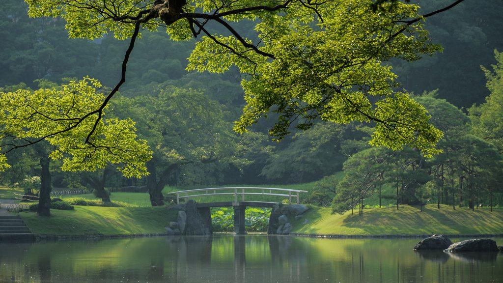 Bridge over river against trees, Tokyo, Japan