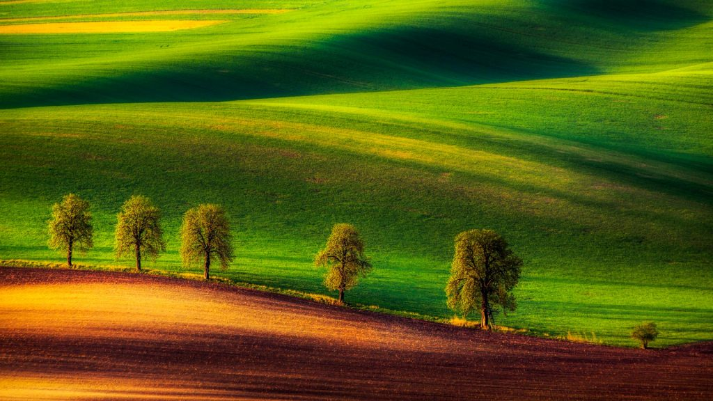 Tree Family, Moravia, Czech Republic