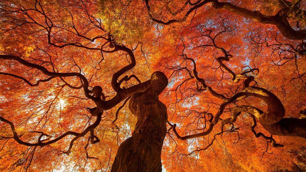 Autumn tree at Shinjuku Gyoen national park in Tokyo, Japan
