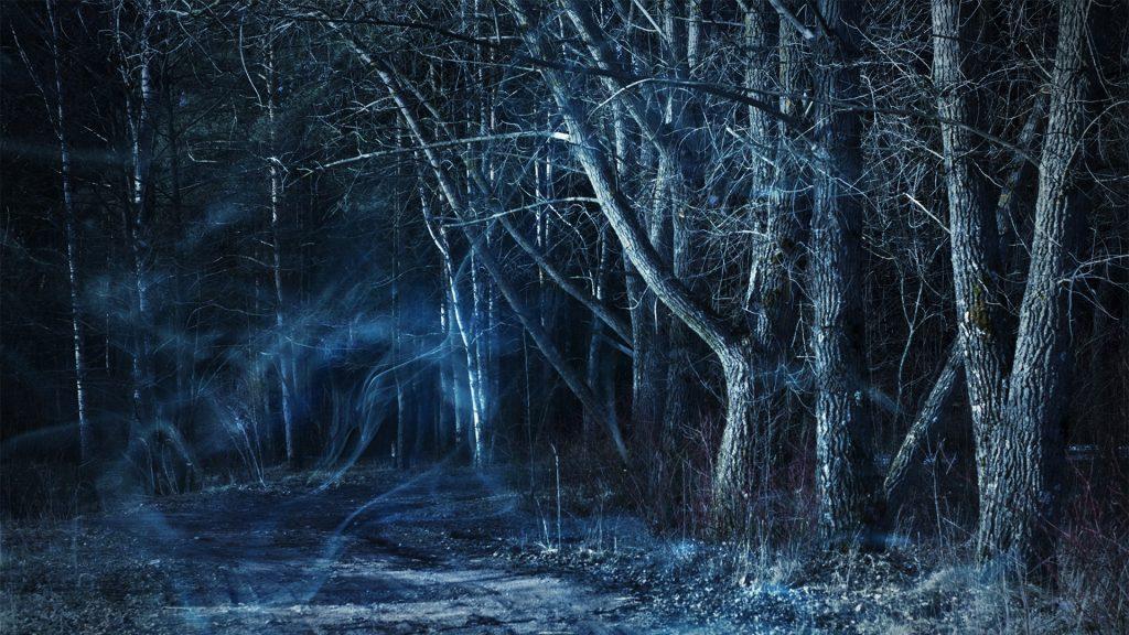 Dark misty forest by moonlight