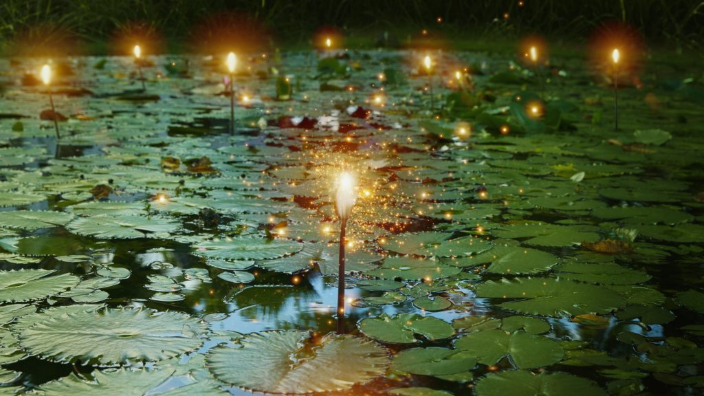 Light bulb and glowing lights over lily pads in pond