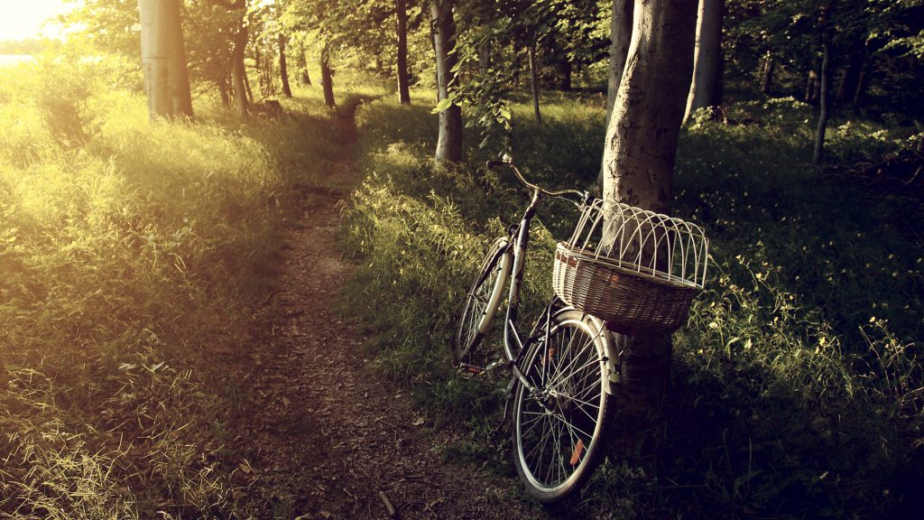 Today I walk, bicycle abandoned in forest, Brunswick, Germany
