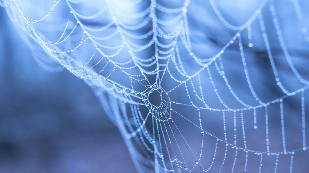 Spider web with water droplets on a blue background