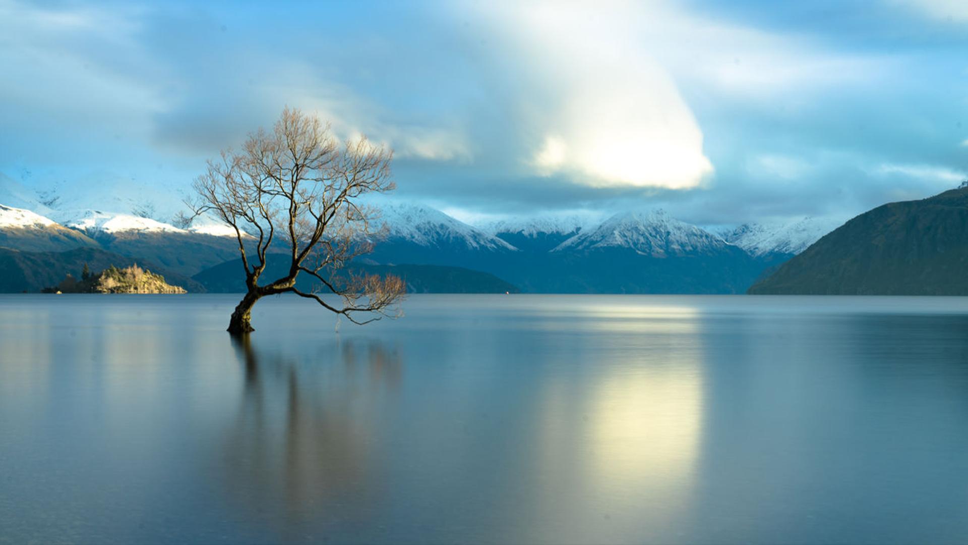 Famous lone tree on lake Wanaka, New Zealand | Windows 10 Spotlight Images