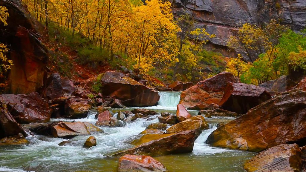 Rainy day on the North fork of Virgin River in Zion Canyon, Utah, USA