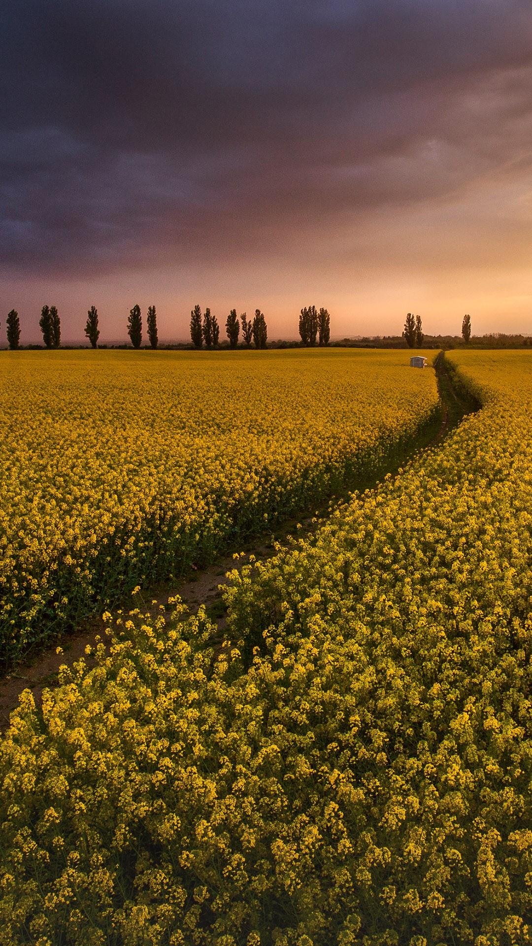 Colza Field At Sunset Tuscany Italy Windows 10