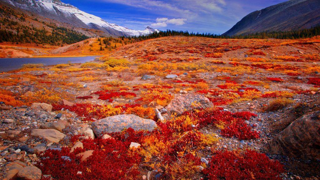 Mountain valley view, Columbia Ice fields, Jasper National Park, Alberta, Canada
