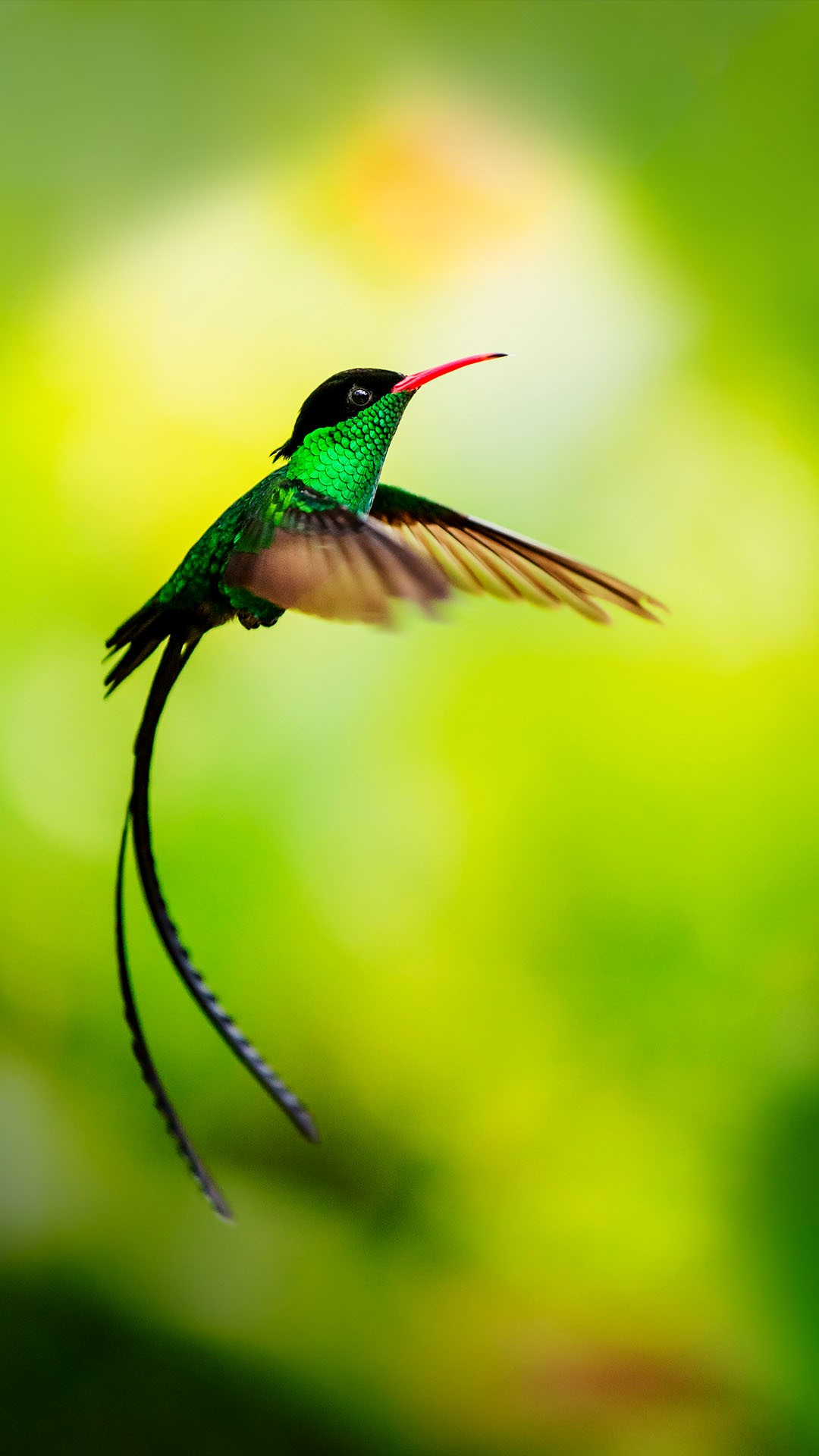 hummingbird in flight jamaica windows 10 spotlight images