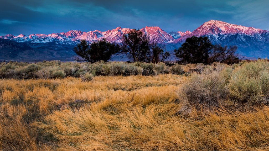 Flowing grasses with sunrise on Mount Tom and Basin Mountain, Bishop, California, USA