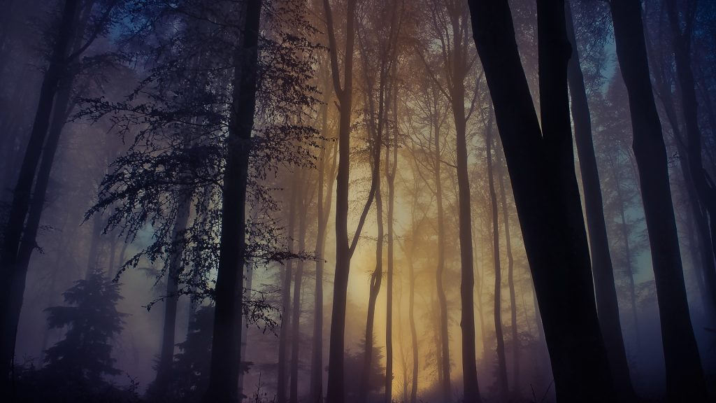 Escape the day, sunlight in a foggy forest, Medvednica, Croatia