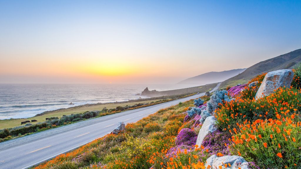 Pacific coast highway in spring, wild flowers in Big Sur, California, USA