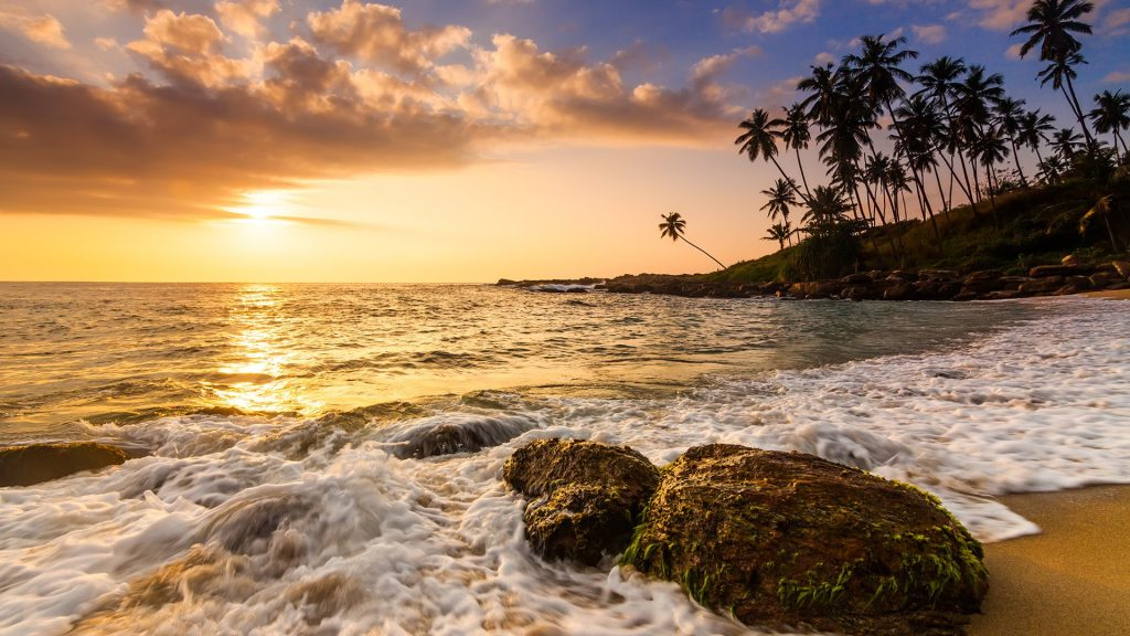 Sunset on the sandy beach with coconut palms, Sri Lanka