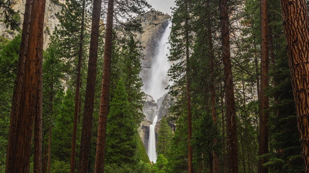 Waterfall at Yosemite framed by pine trees, California, USA