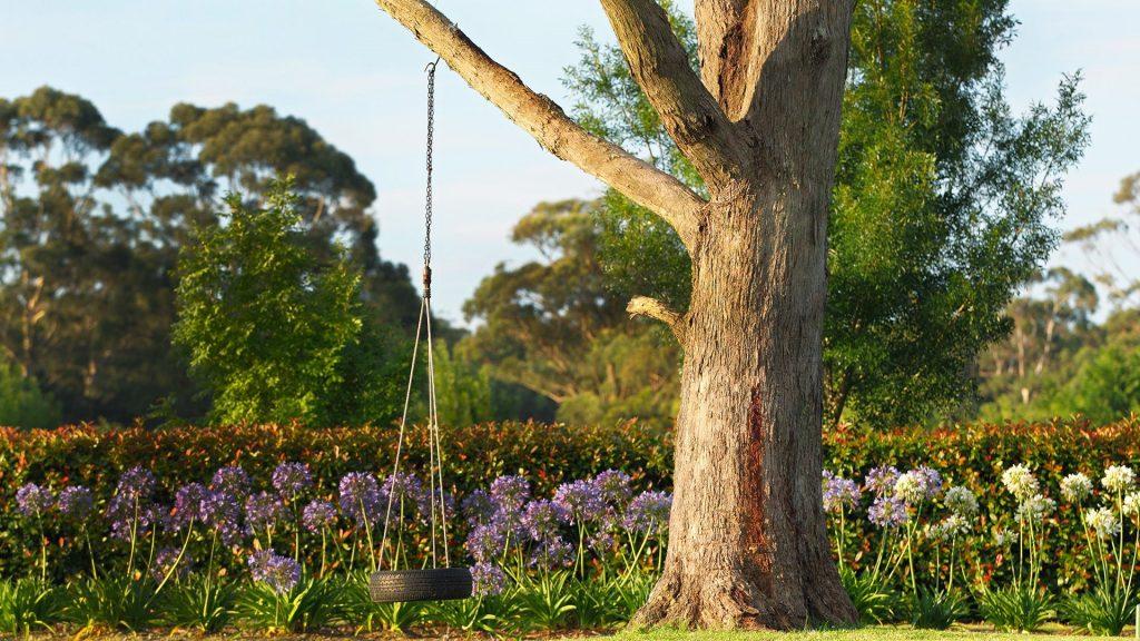 Tree trunk with tire swing, Australia