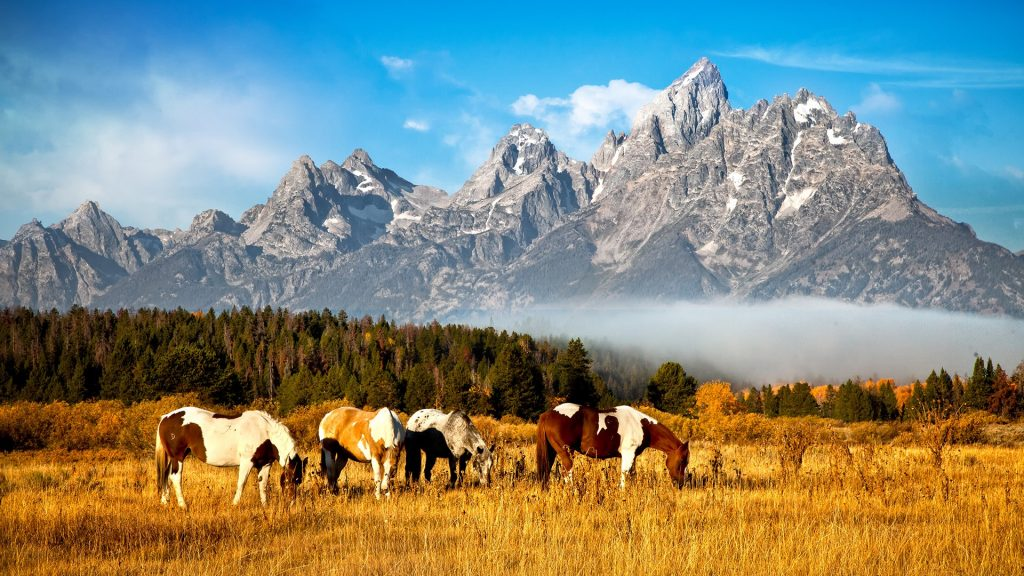 Horses grazing in field, Grand Teton mountain, Wyoming, USA | Windows 10 SpotLight Images