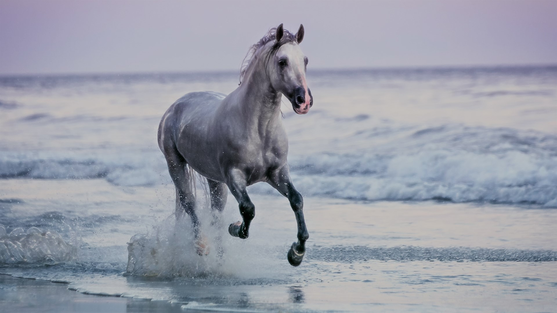 Horse running on beach sunset santa barbara beach for Window horses
