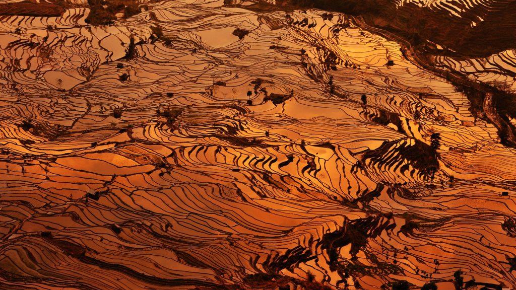 Terraced hillsides, Yuanyang County, China