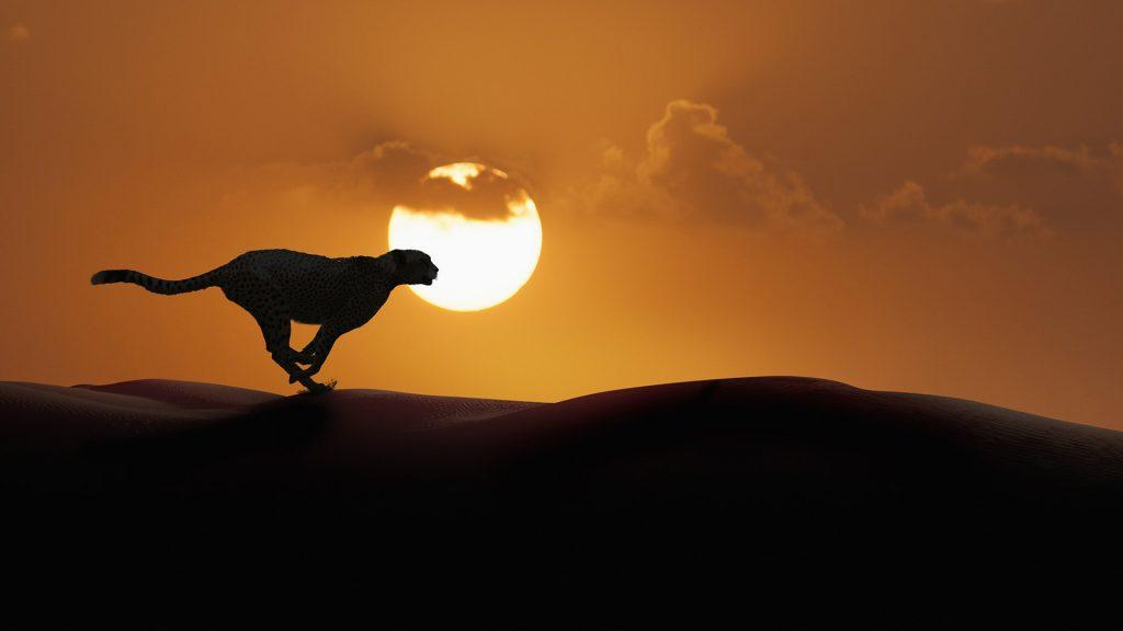 Silhouette of cheetah running in desert