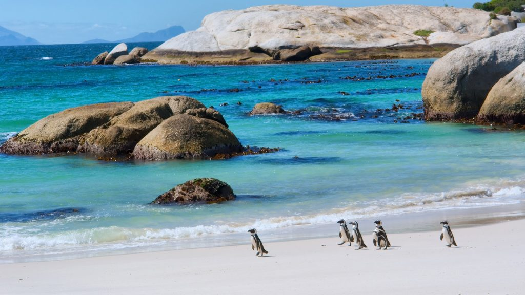 Penguins walk on sunny beach, Boulders Beach Nature Reserve, South Africa