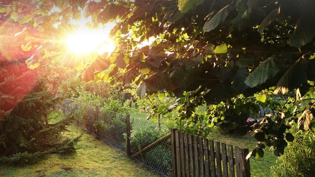 Chainlink fence in lush green garden