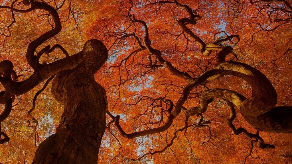 Autumn tree, Shinjuku Gyoen National Park, Tokyo, Japan