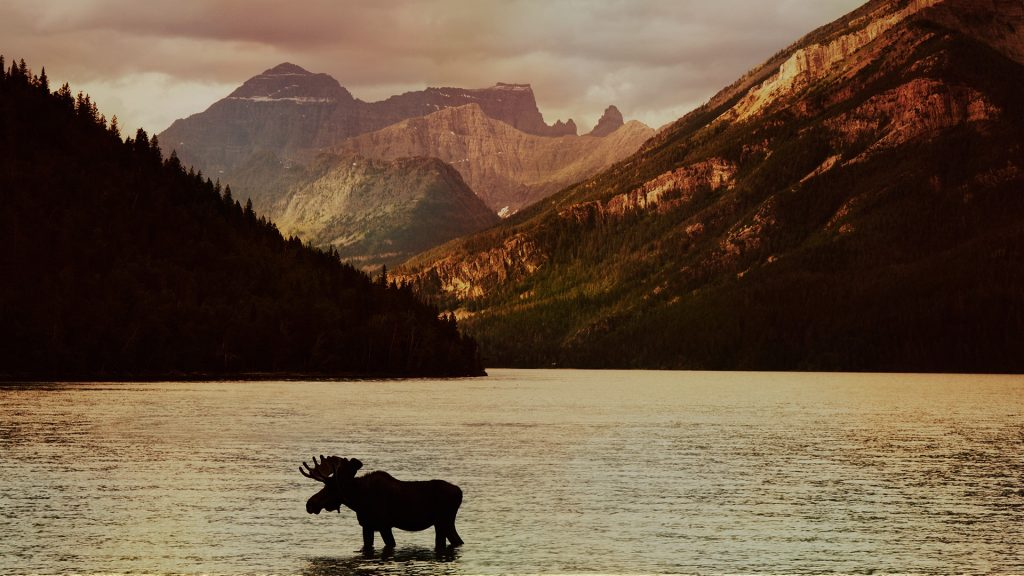 Waterton Lakes National Park at sunset with moose silhouette, Alberta, Canada