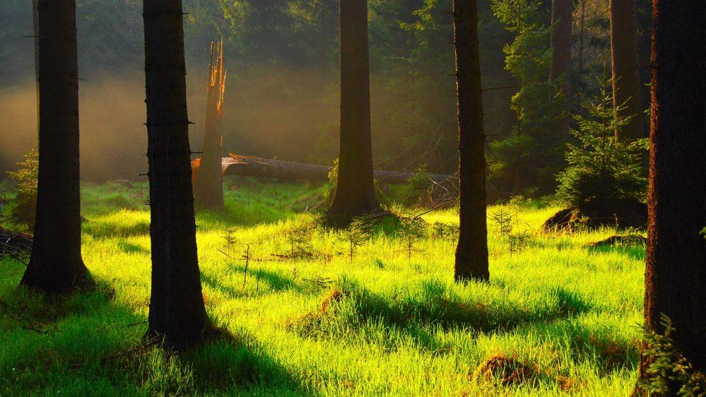 Mysterious forest, Jeseníky Mountains, North Moravia, Czech Republic