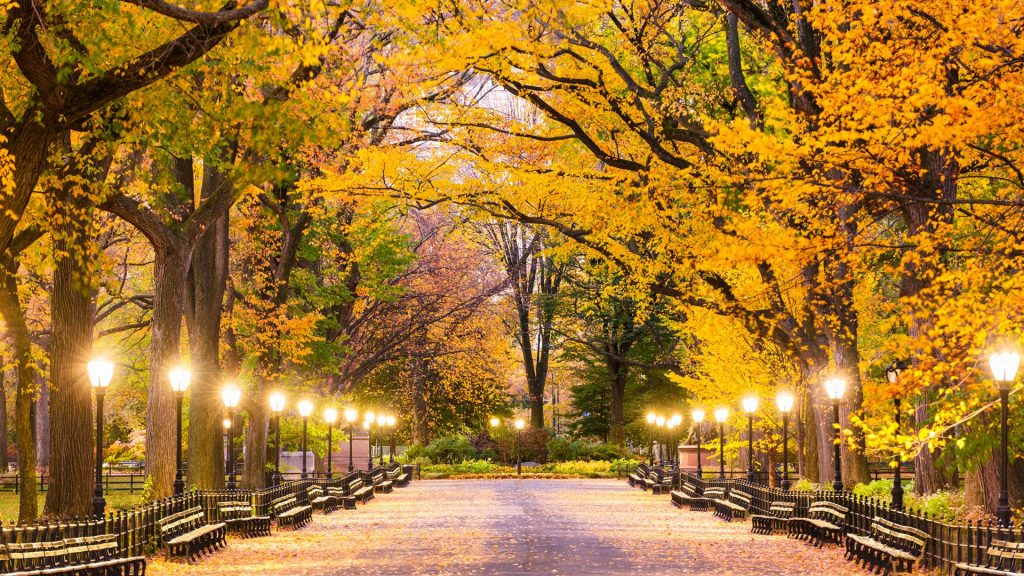 Central Park at The Mall during predawn, Manhattan, New York City, USA