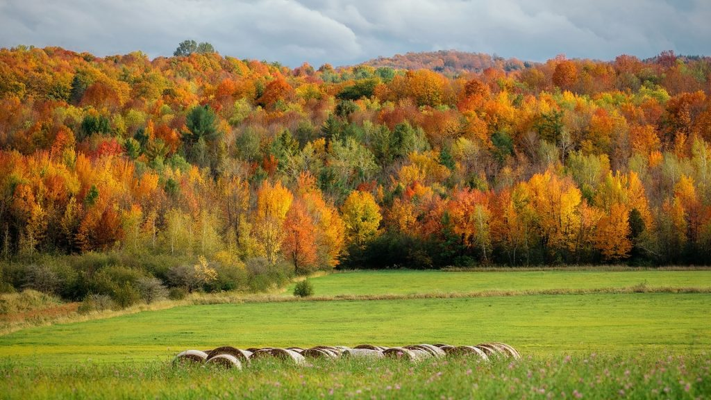 Autumn landscape with colorful trees in forest, Montreal, Quebec, Canada