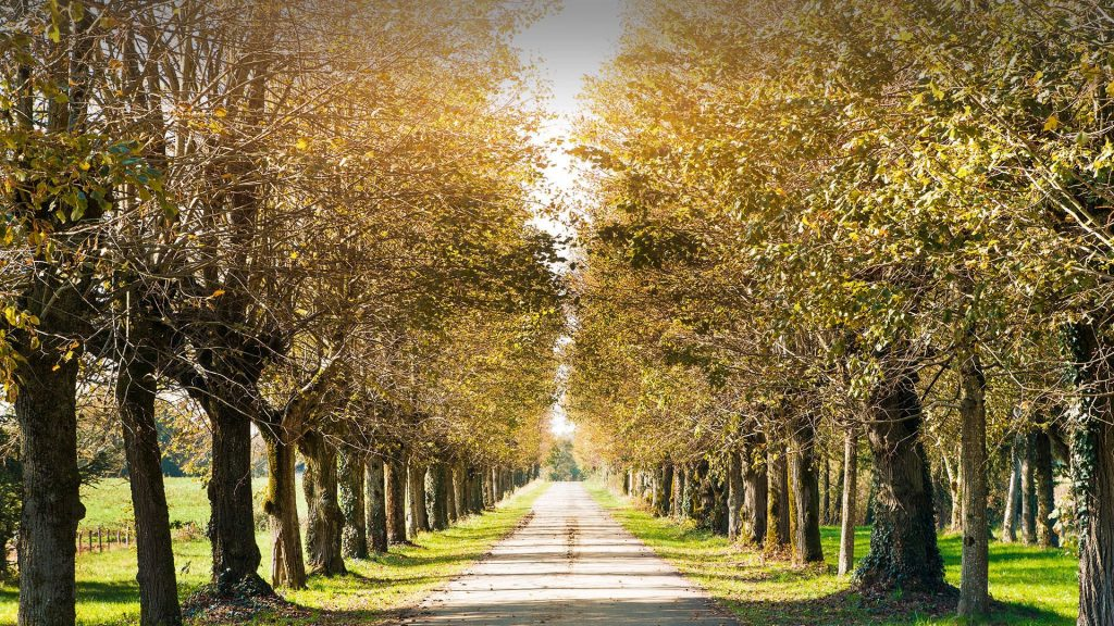 Country road tree lined perspective in autumn with bright sunlight