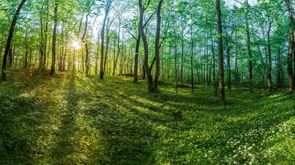 Spring in the forest Gullkrona, Tønsberg, Norway