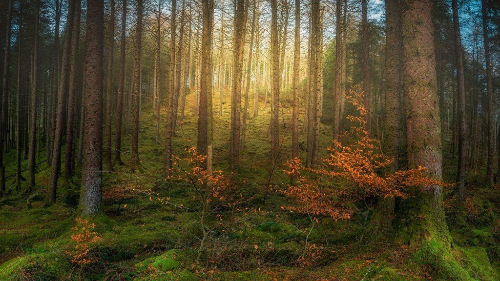 Magical forest between River Garry and Loch Oich near Invergarry village, Scotland, UK