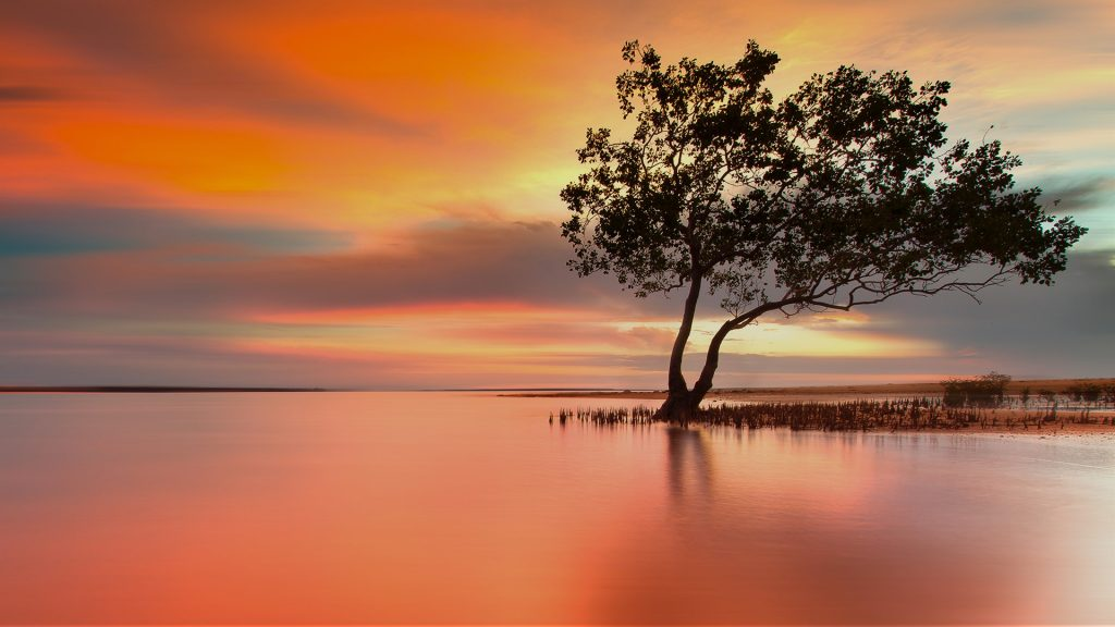 Escape from reality, mangroves at sunset, Darwin, Australia