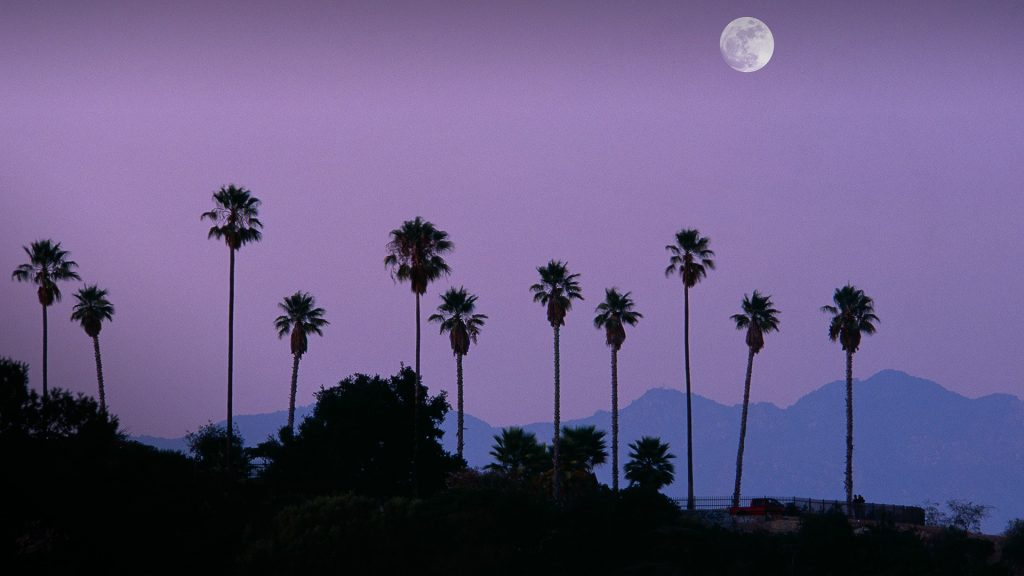 Moon over palm trees at dusk, Hollywood, Los Angeles, California, USA