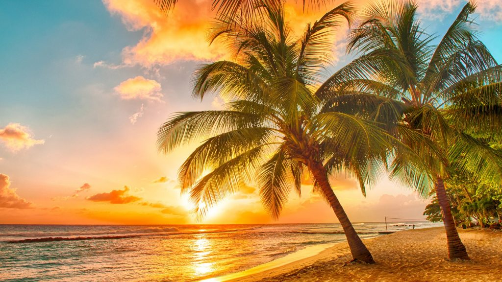 Sunset over the sea on a Caribbean island of Barbados, view at palms on the white beach