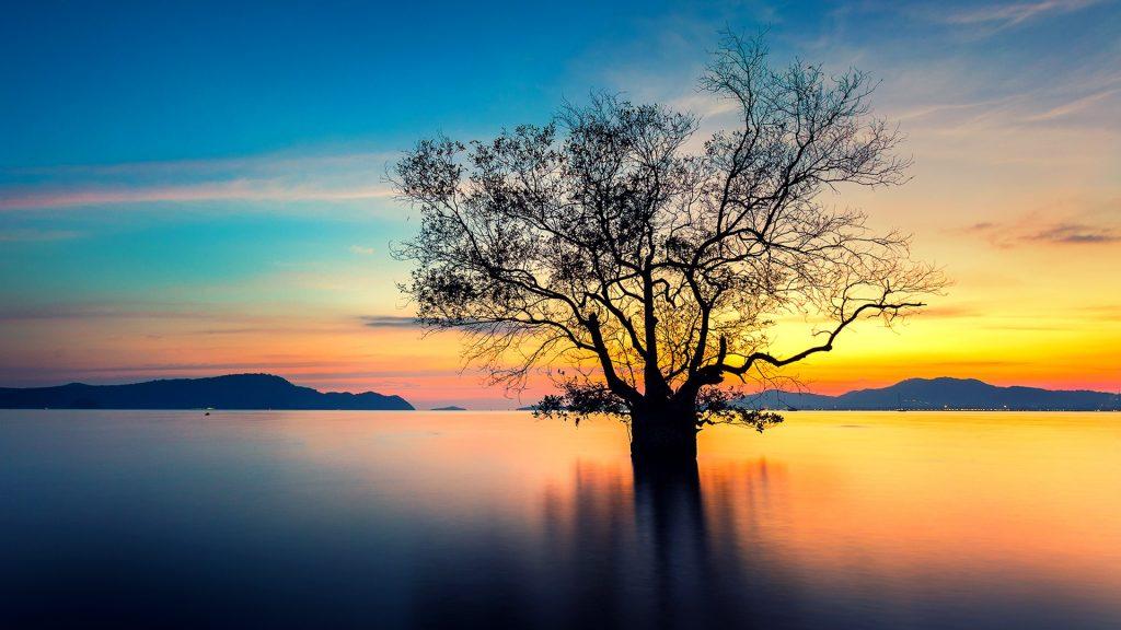 Sunset with dead tree, Phuket, Thailand