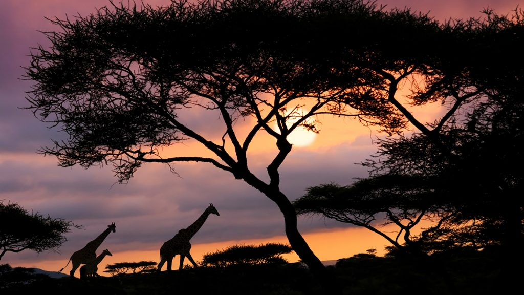 African safari sunset, Serengeti National Park, Tanzania