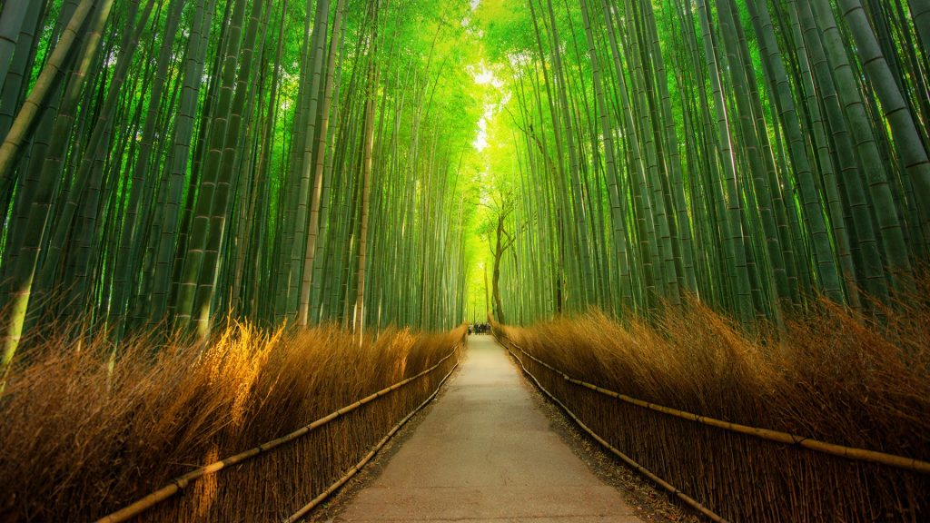 Path in bamboo forest in Arashiyama, Kyoto, Japan